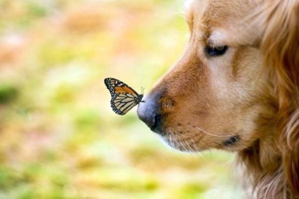 cani_altri_animali_011